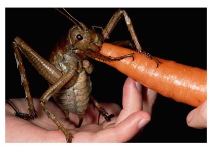 Huge Bug