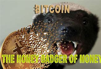 Image result for bitcoin honey badger